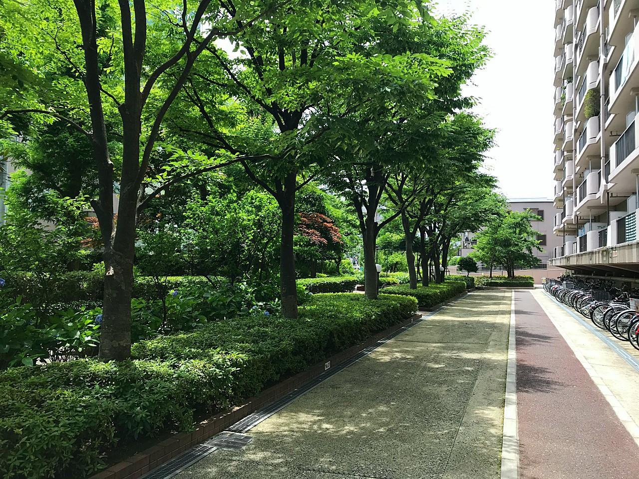 敷地内に緑が多いです