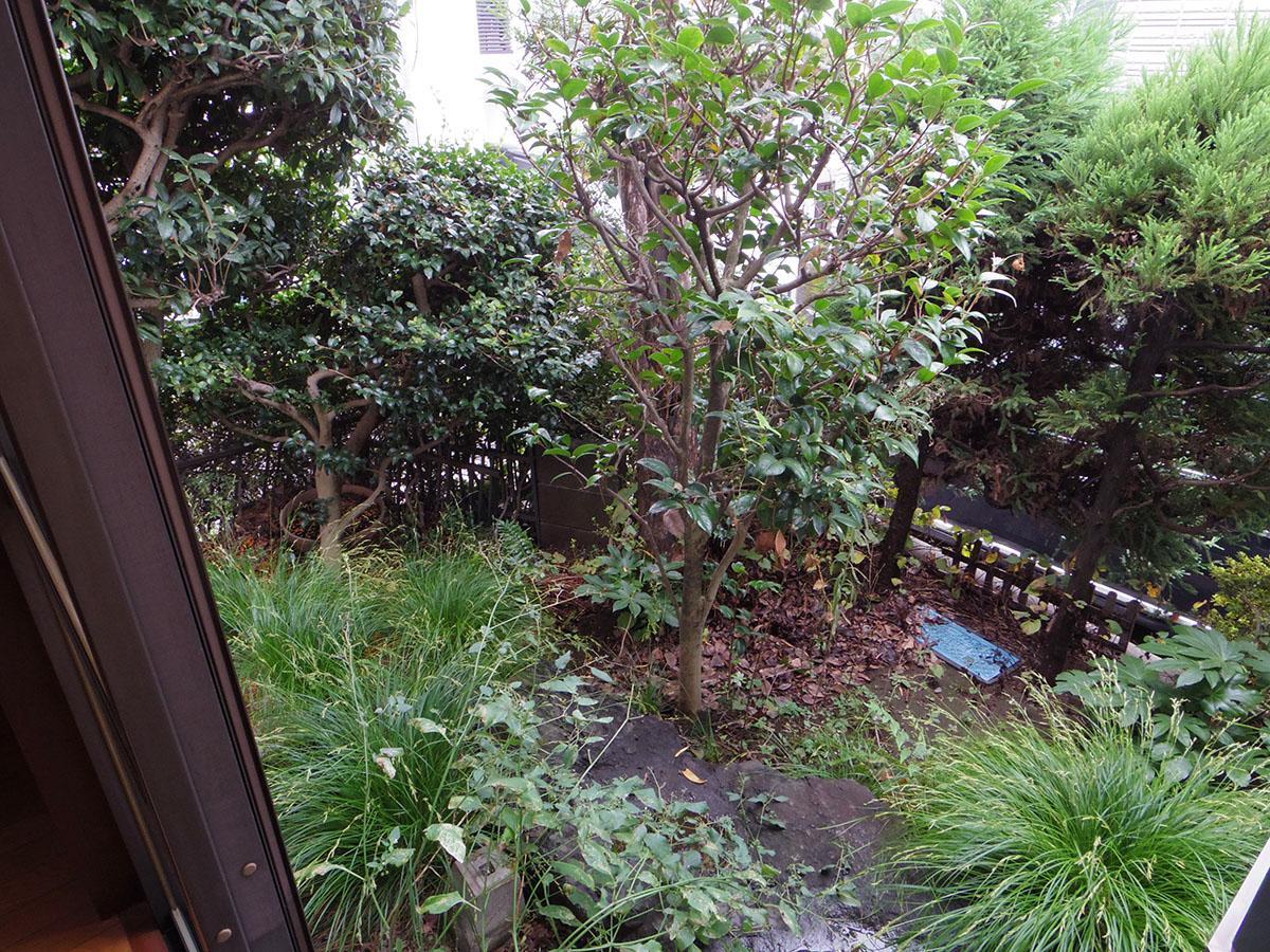 ところ狭しと植栽が植えられた小庭