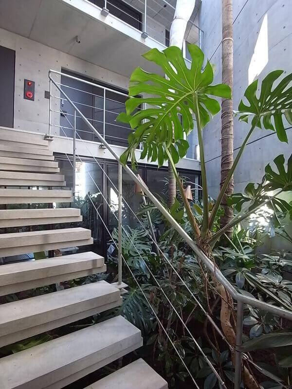共用階段。中庭にはシンボリックな植物が植えられています