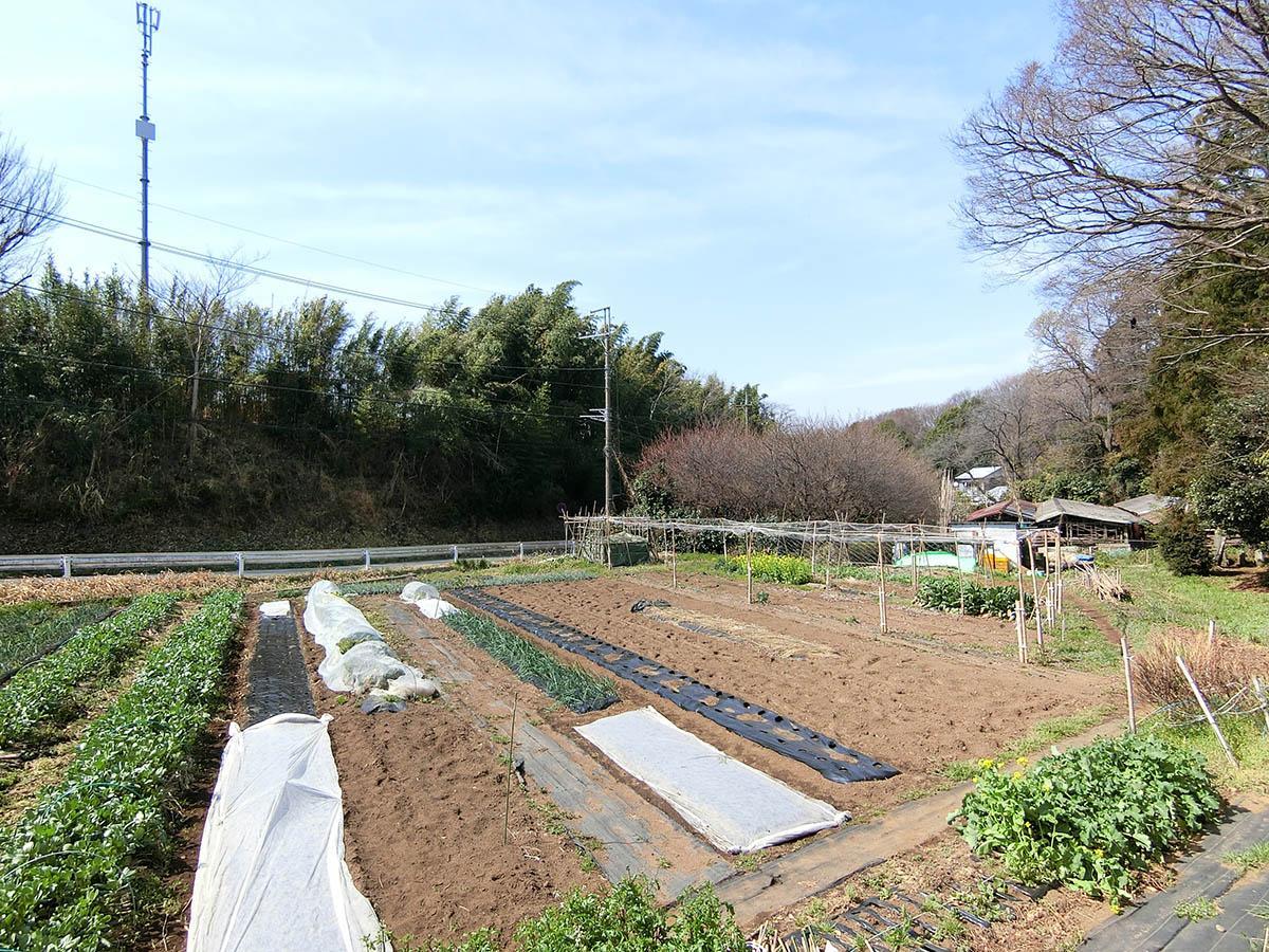 隣は別の方が所有する畑。たまに畑の手入れに来ていて、野菜をもらうこともあるそう