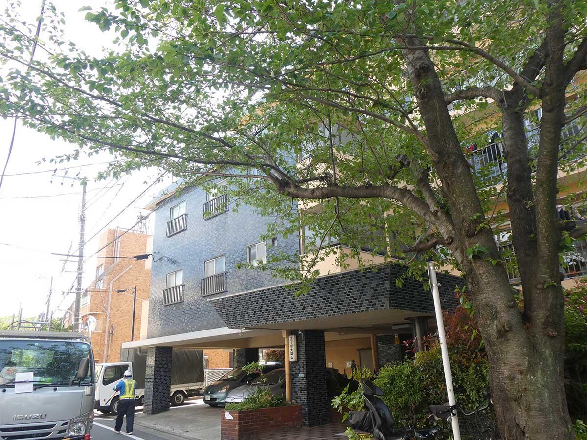 大きな桜の木が出迎える、タイル張りのレトロマンション