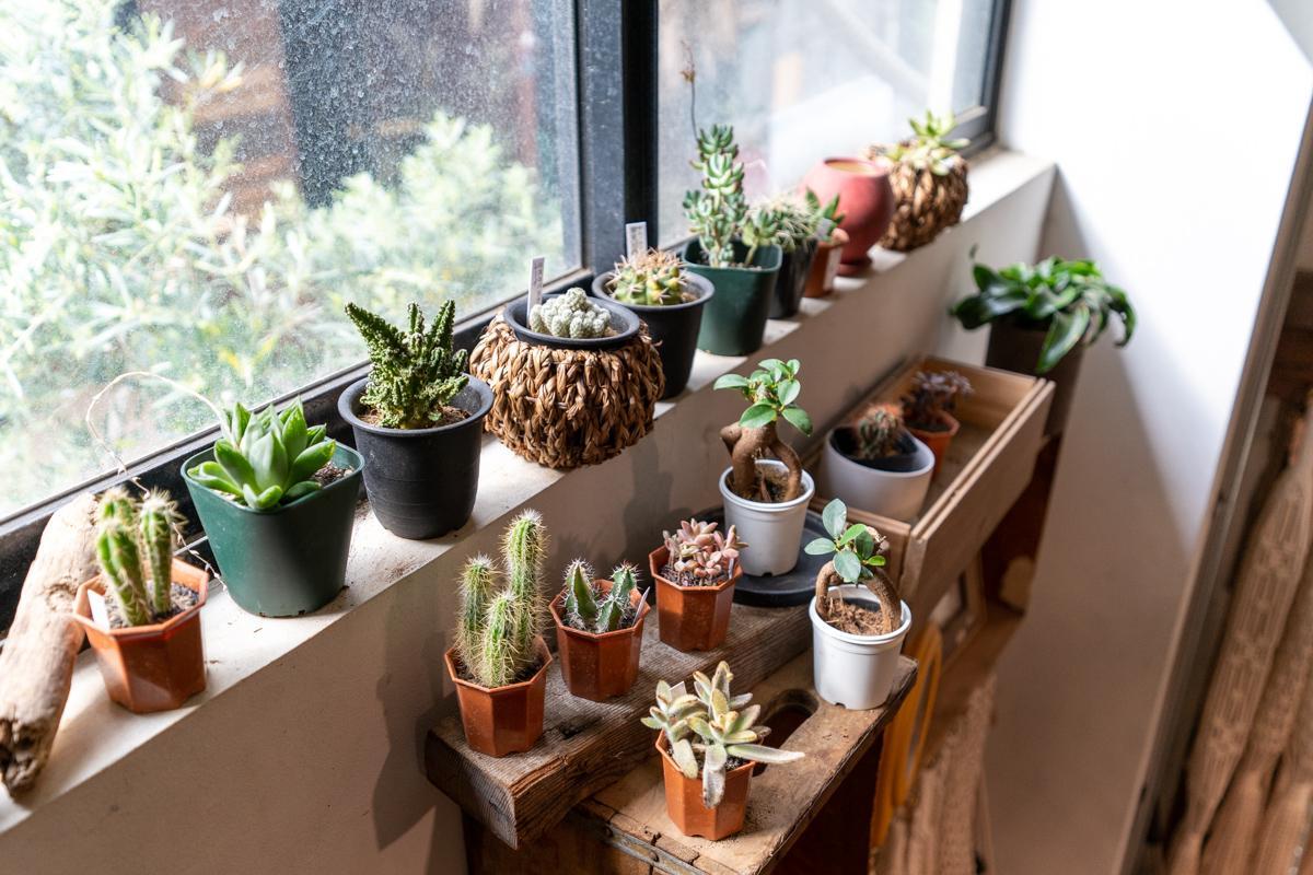 グリーンショップの植物たち