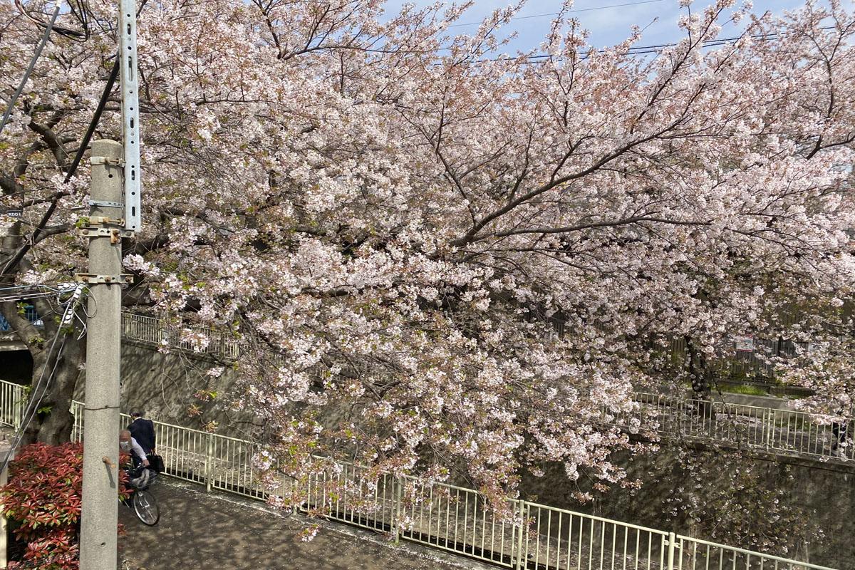 春、桜の時期には2階からこんな眺めが堪能できます。