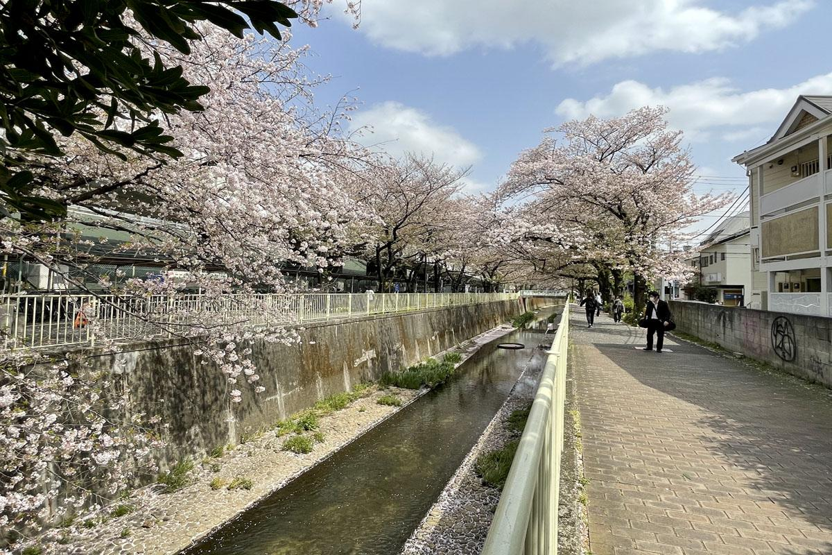 春は桜がとてもきれい
