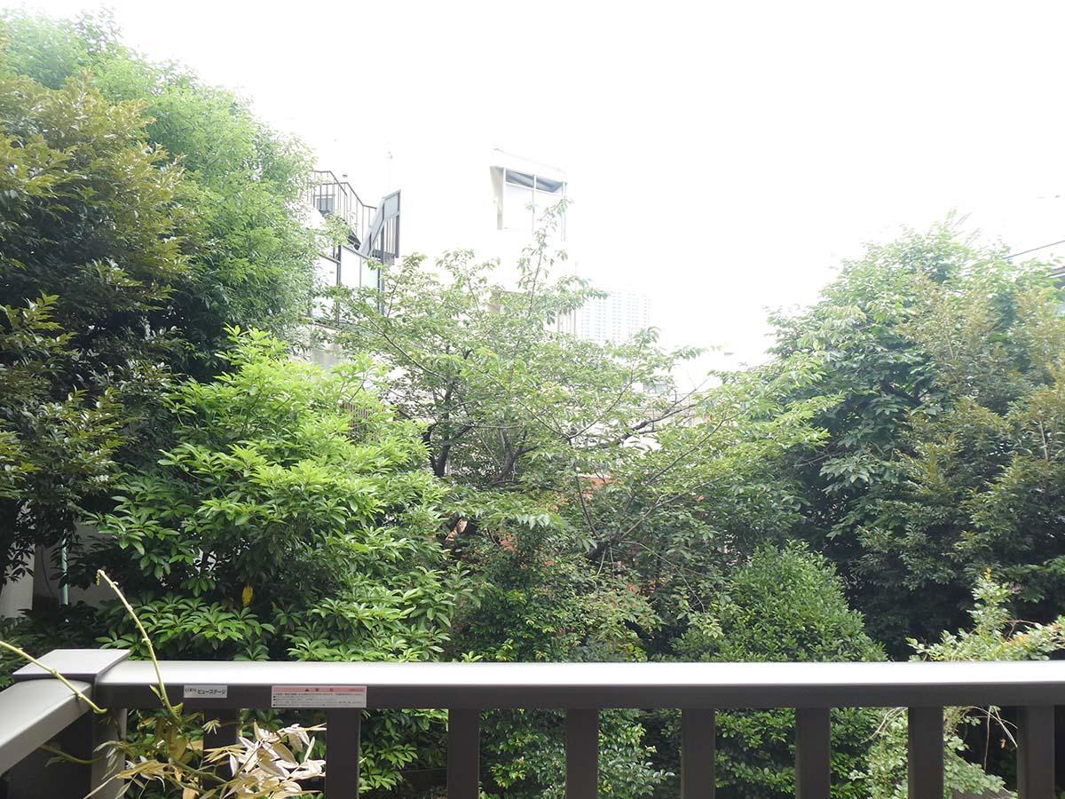 バルコニーからの眺め。もりもりの緑!