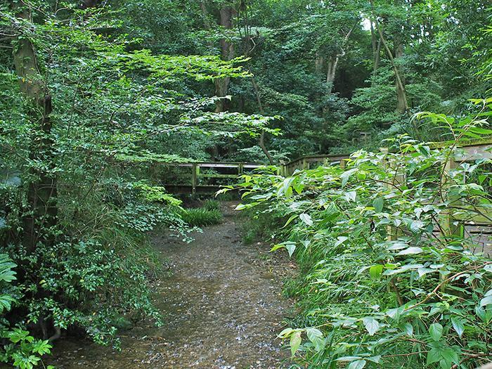 雑木林の中に清流が流れる妙音沢には物件から徒歩7分ほどで行ける