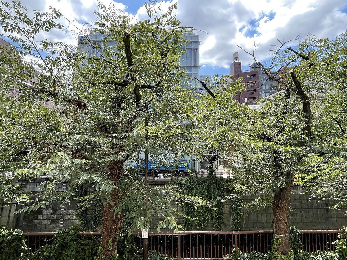 バルコニーのすぐ先には桜並木