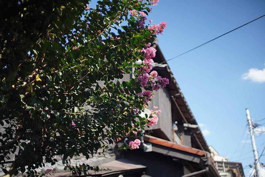 庭にも花が咲く木々が植えられています。夏はサルスベリがピンク色の花を咲かせます