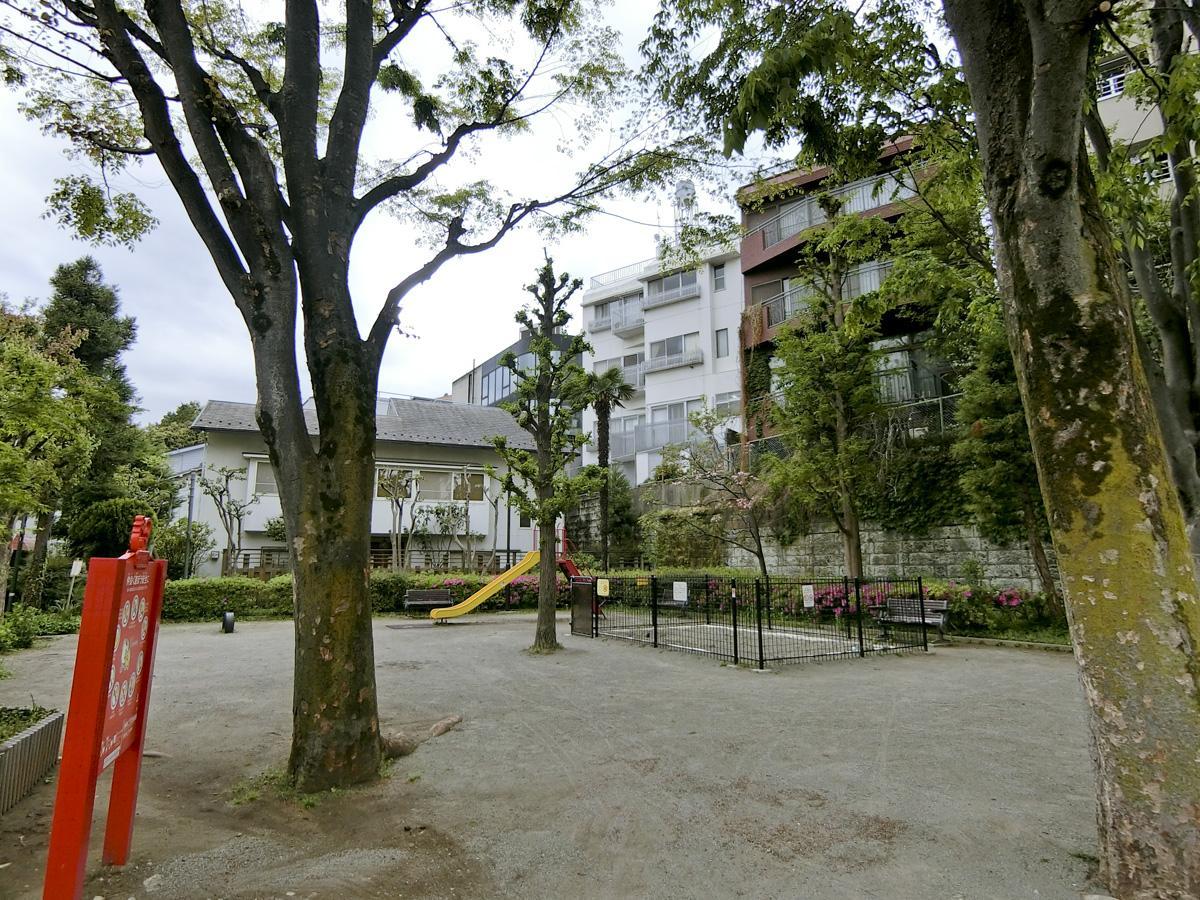公園内には背の高い木が何本も生えてます