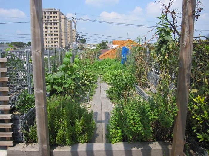 屋上菜園スペース