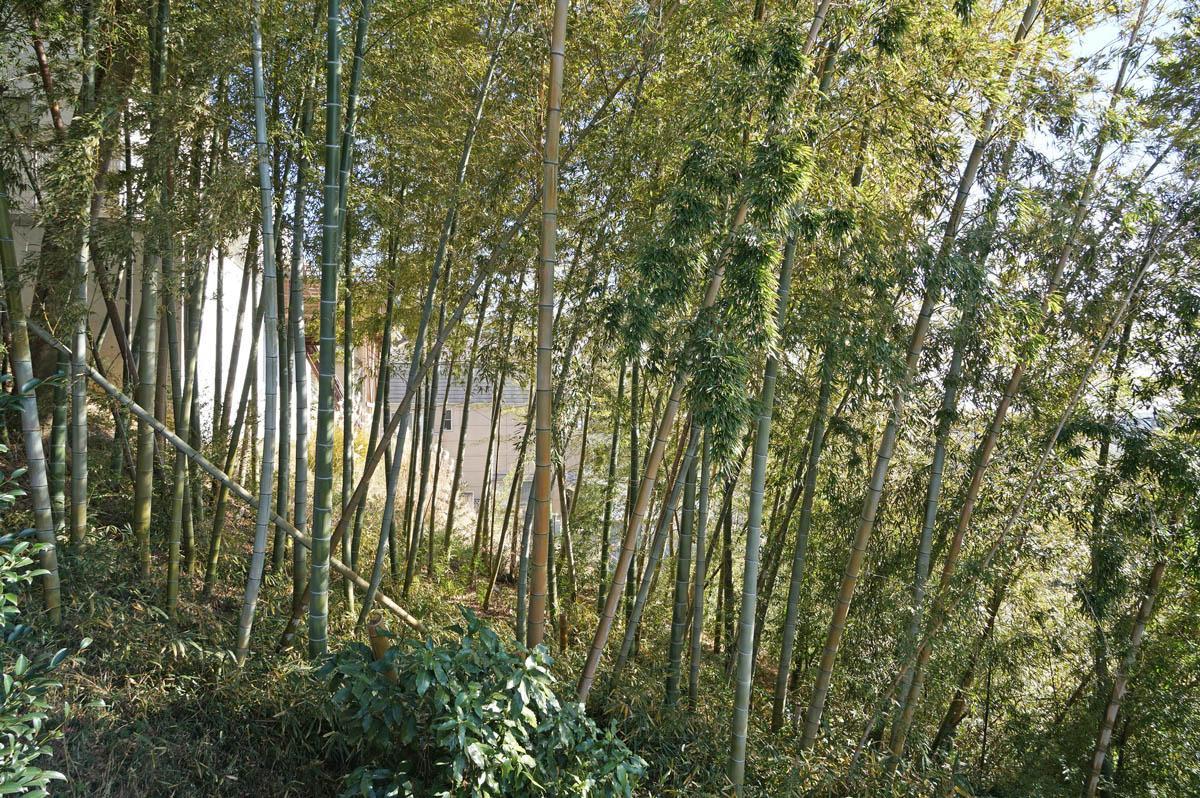 1階和室の窓からは竹林VIEW