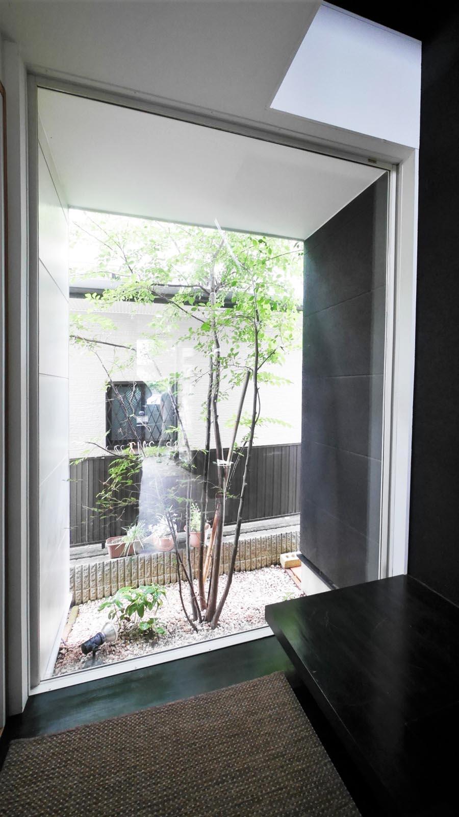 玄関入って正面にはシンボルツリー