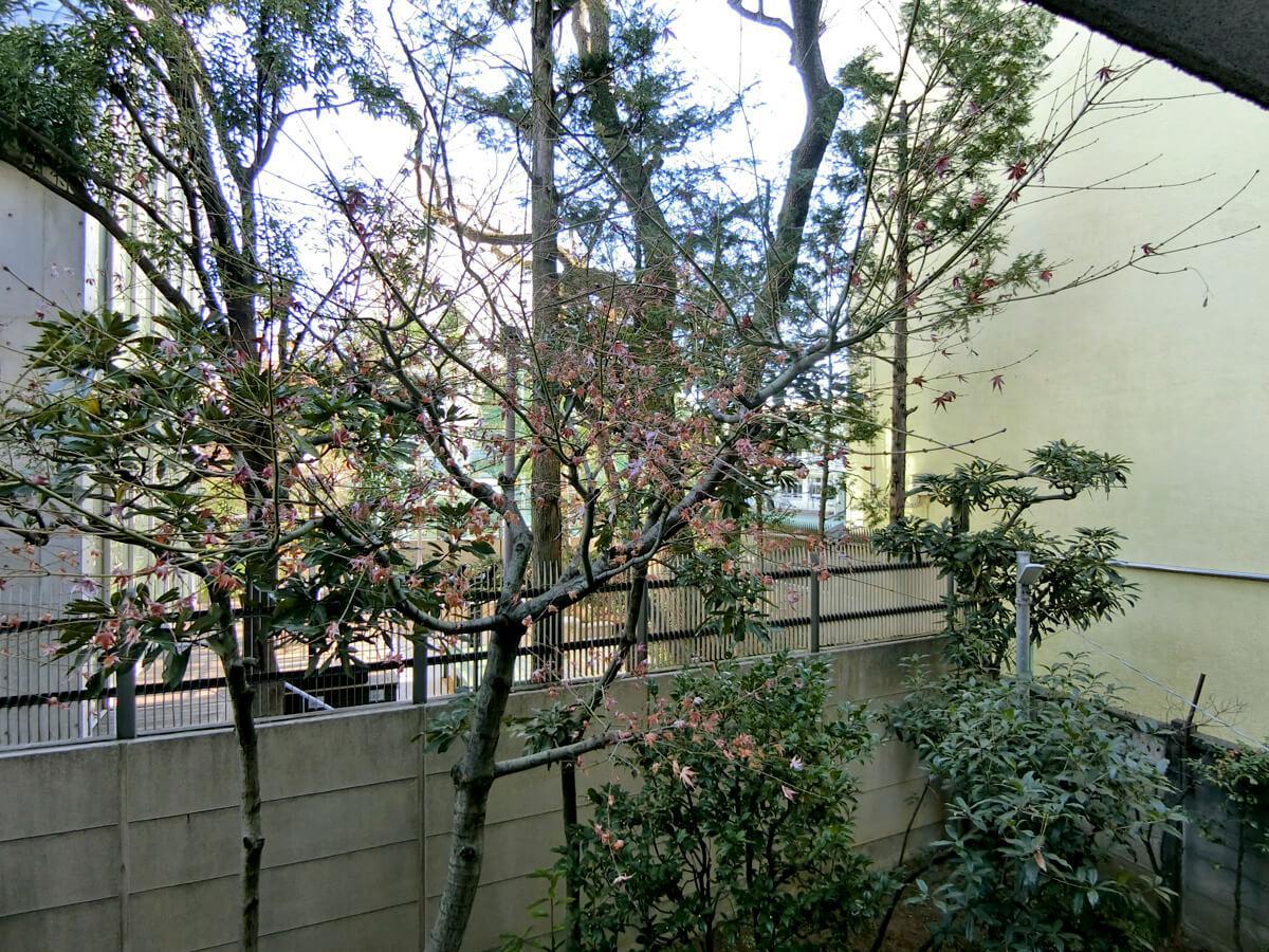 2階南東側の部屋から、緑ビュー。夏になるともう少しモッサリしそう