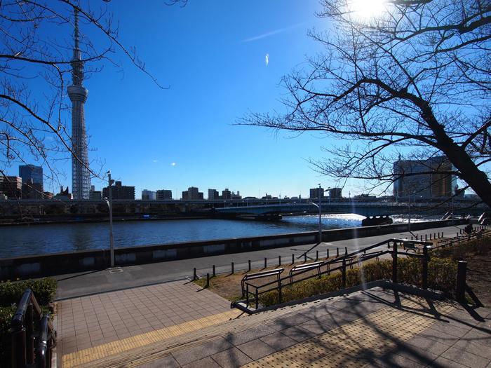 近くの隅田公園では桜と川とスカイツリーが楽しめる。この公園を通って毎朝通勤するのもいい