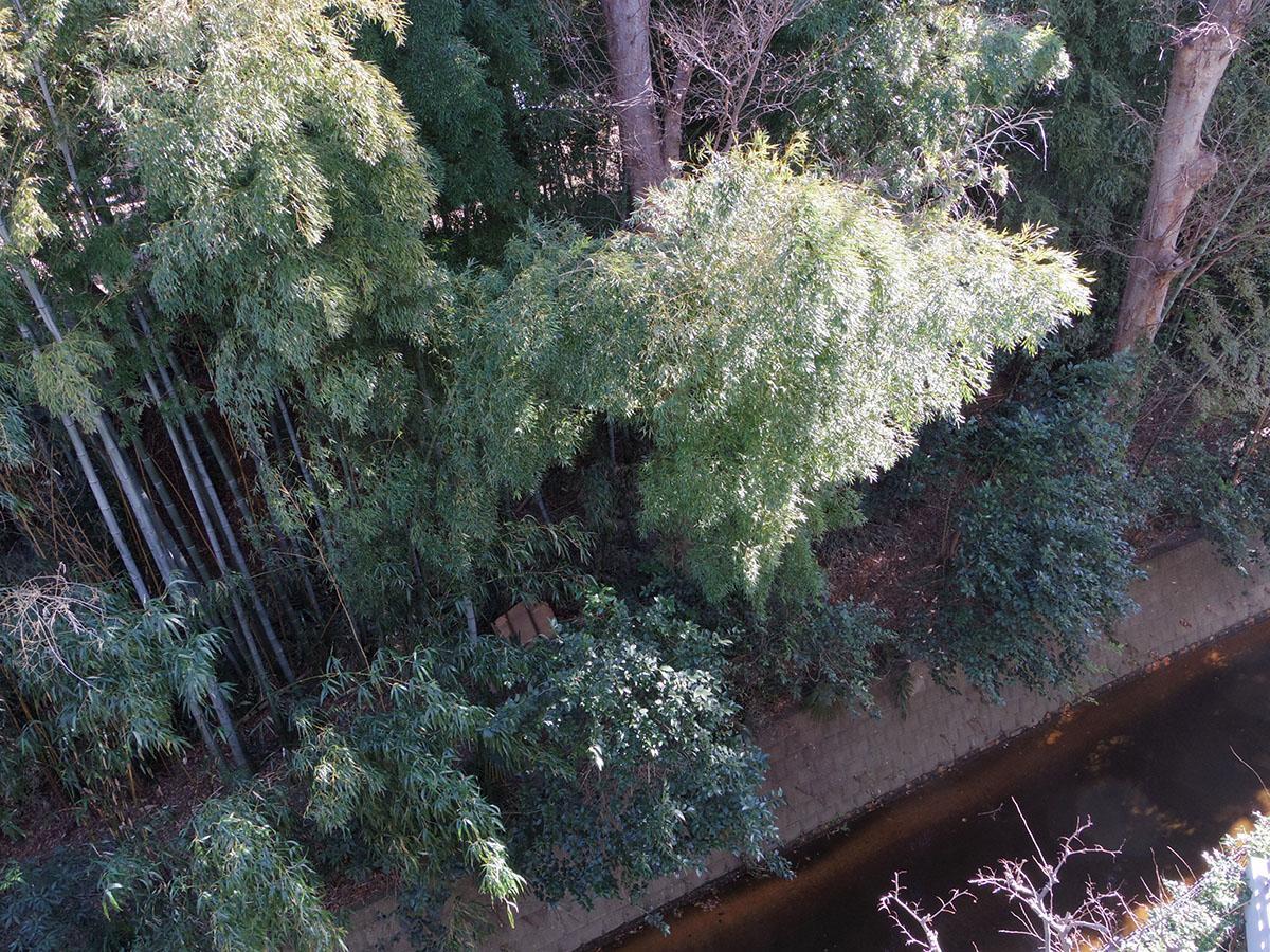 林は隣の敷地に自生しています。下には小川が流れています