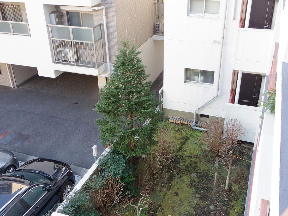 敷地内には大きなモミの木