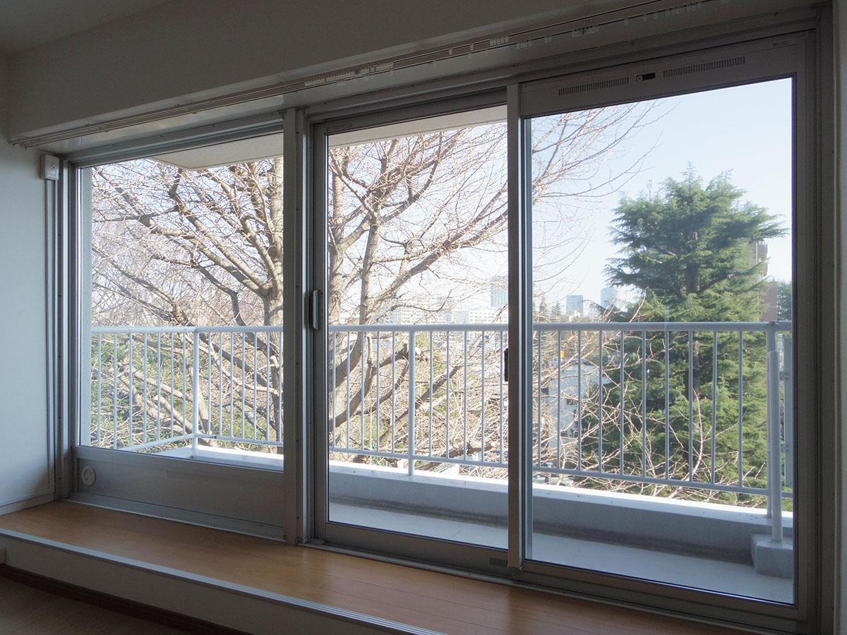 大きな窓面の先には、イチョウの木とヒマラヤスギ。イチョウに葉がつけば、窓の先一面が緑&黄色ビューです