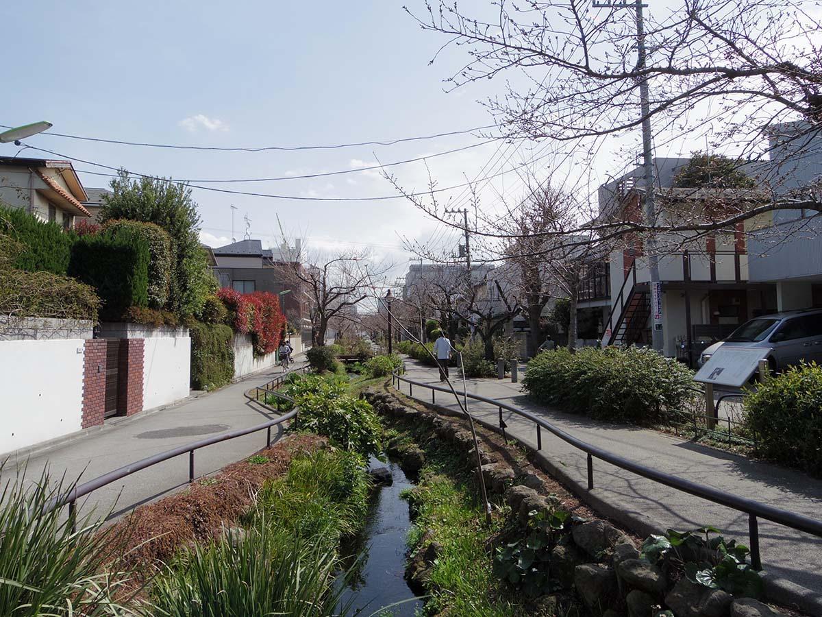 北沢川緑道。池尻方面までずっと、この桜並木の緑道が続きます