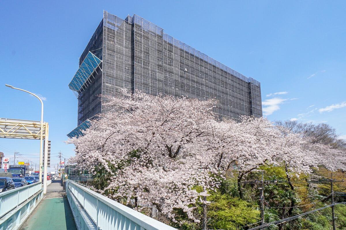 外観:桜が見事でした