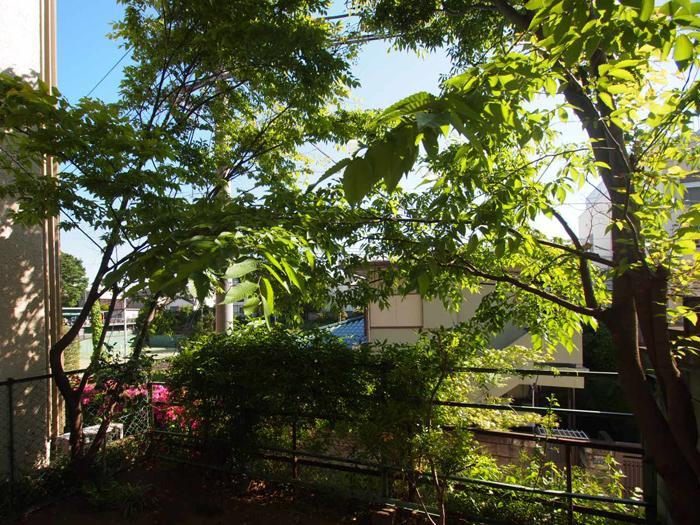 【庭】緑がこんもり。高台に位置し、向かいの建物との距離があるのもいい