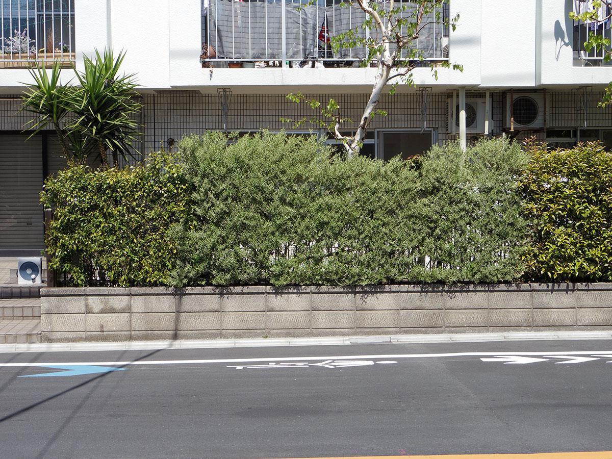 道路からちらっと見える感じ。今の植栽だけで足りないという方は、鉢植えを置いたりしてさらに緑のカーテンを