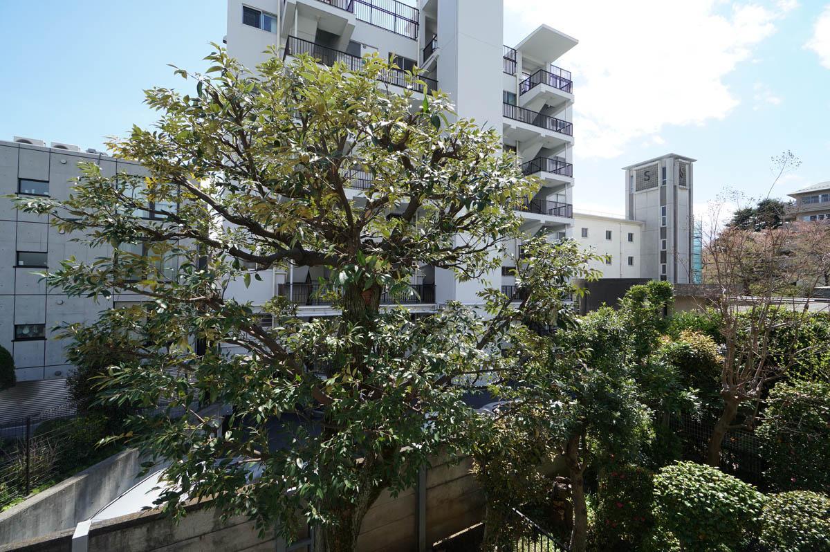 窓の先には庭に生えた大きな木が見えます