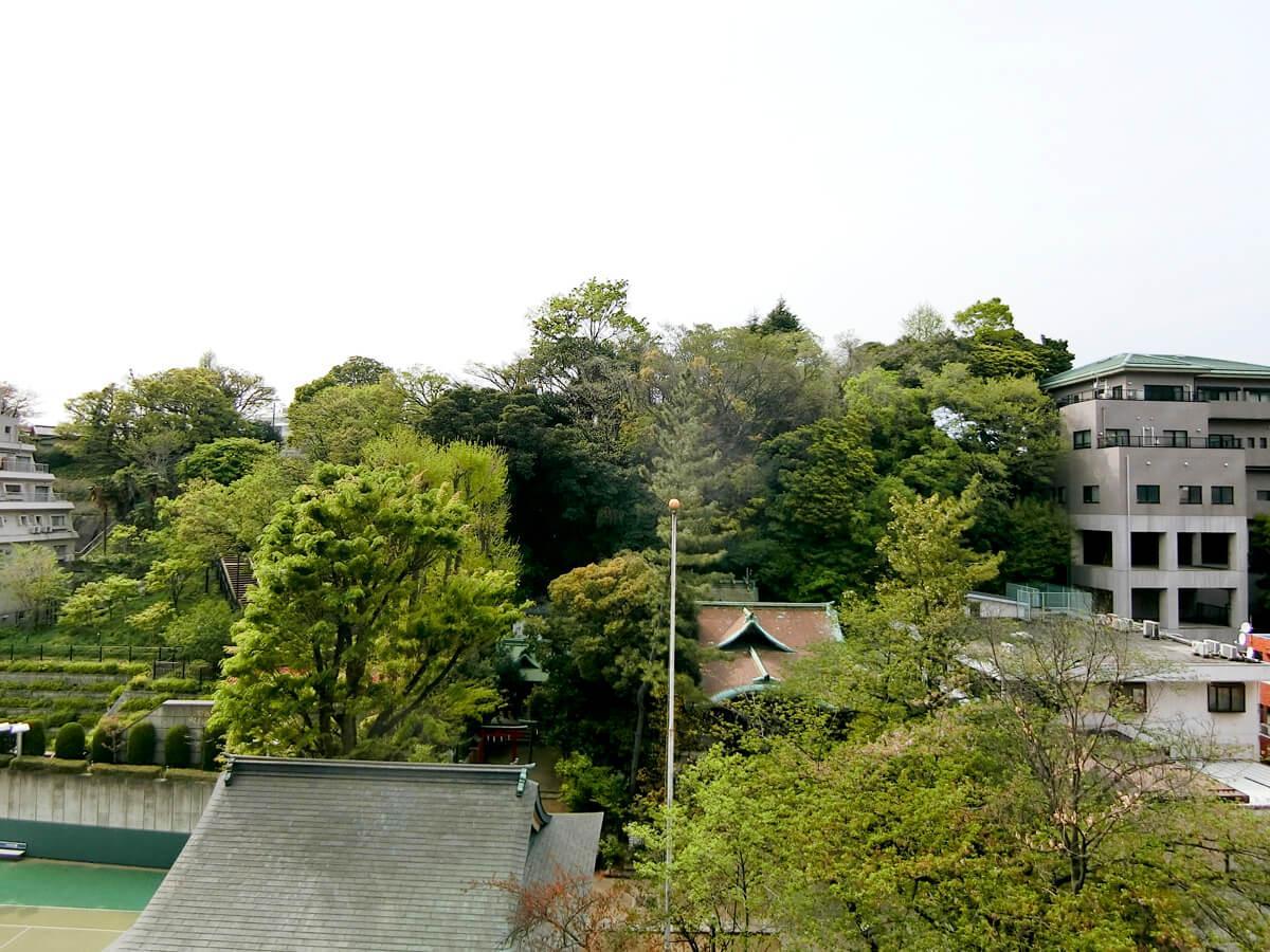 バルコニーからは、緑いっぱいの景色