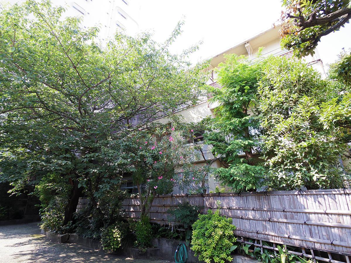 南側外観。桜の木以外も植えられている