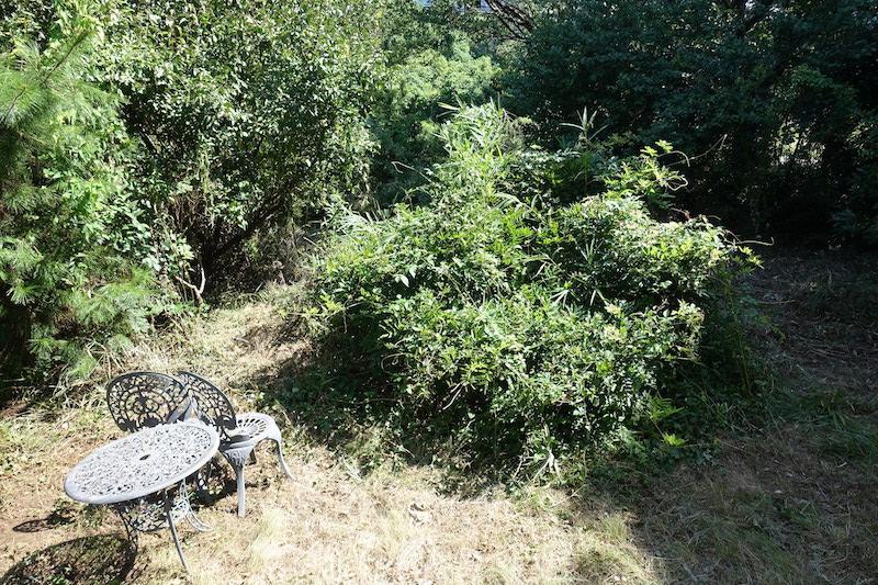 リビングダイニングの前の庭も緑でいっぱい