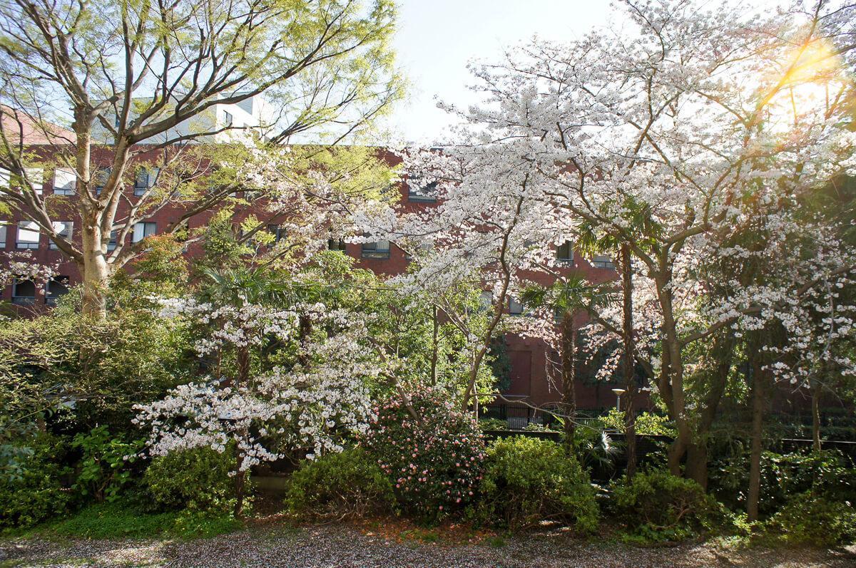 春はバルコニーの前がこんな感じ(この写真は以前2階部分を募集した時のもの)