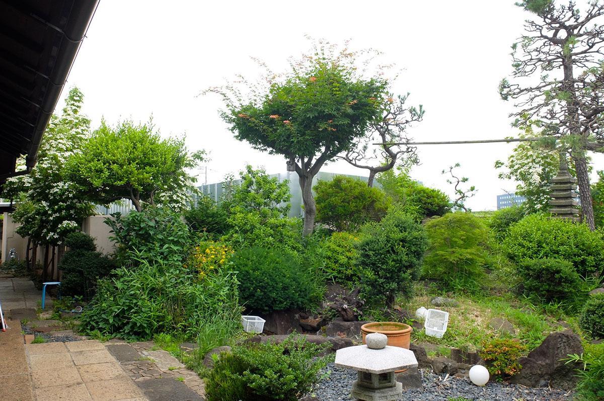 緑豊かな庭