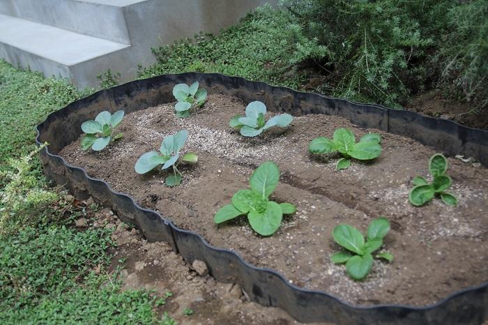 玄関脇に小さな家庭菜園スペースがついています