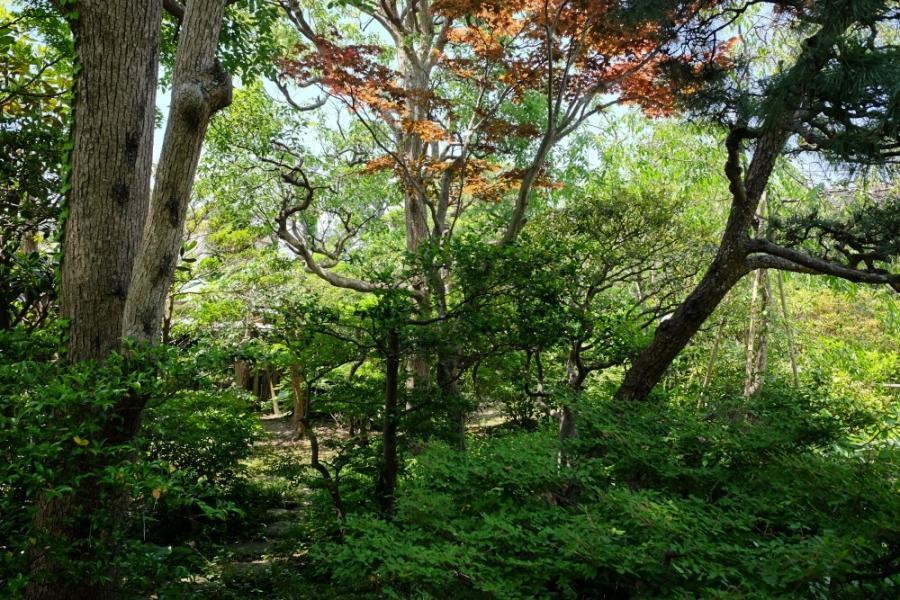 鎌倉駅徒歩9分とは思えないほど静かで深い緑。かつては池に水が引かれ、その水は八幡宮の池からつながっていたのだとか
