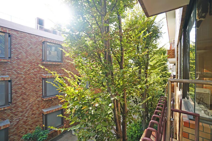 植栽は落葉樹なので、夏は日差しを適度に遮ってくれるとのことです