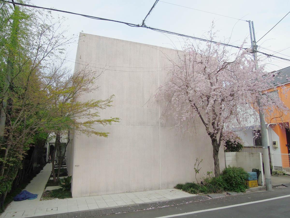 春になれば枝垂れ桜が満開になります
