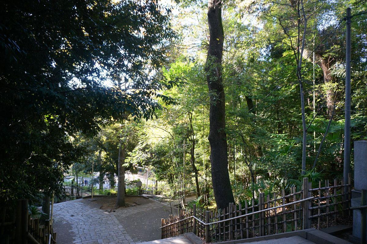 氷川神社:参道を抜けて約70段の階段を上がる、森林浴ができて気持ちいい