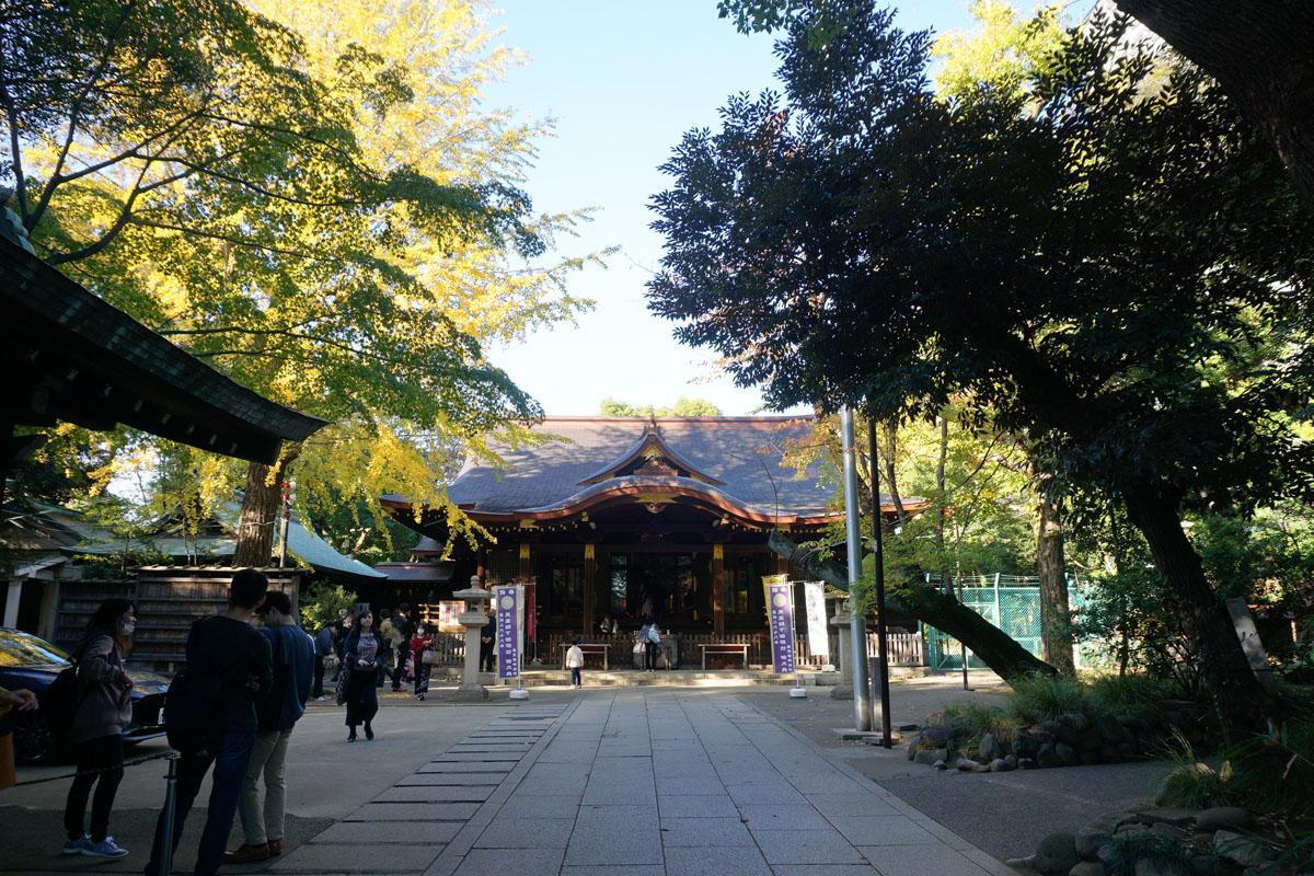 氷川神社:立派な建物。七五三の家族連れで賑わう