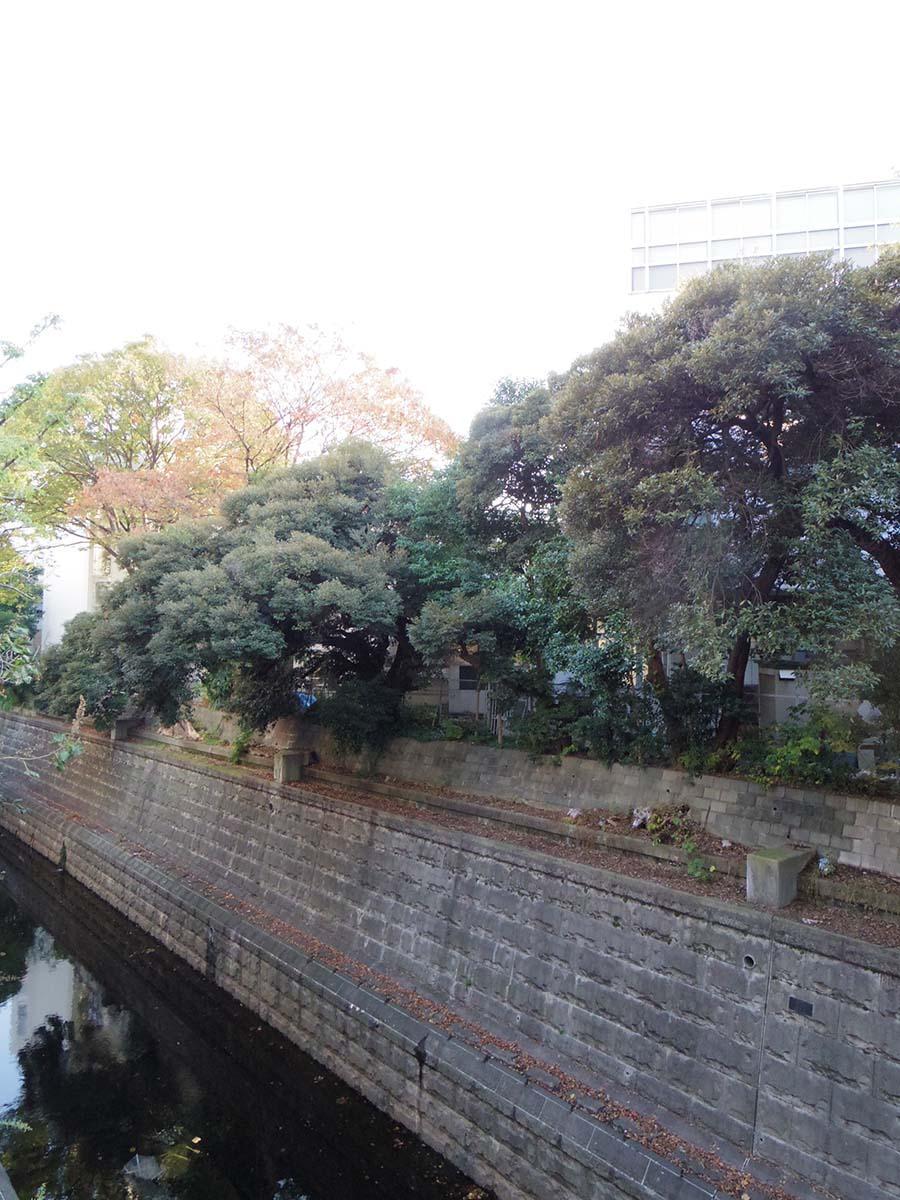 窓の外には渋谷川。ひっそりとゆるやかに都会の間を流れている
