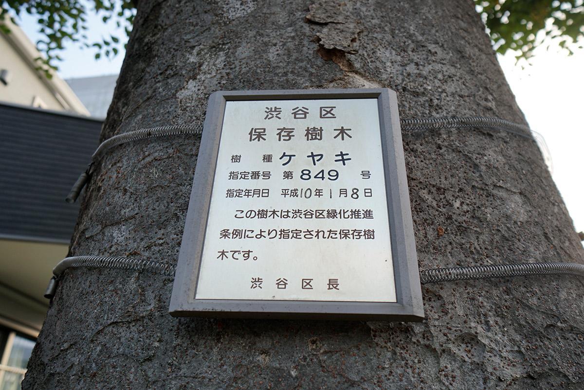 西側隣地の通路がググッと北側に曲がったあたり、既存古家の正面には渋谷区保存樹木のケヤキがあります