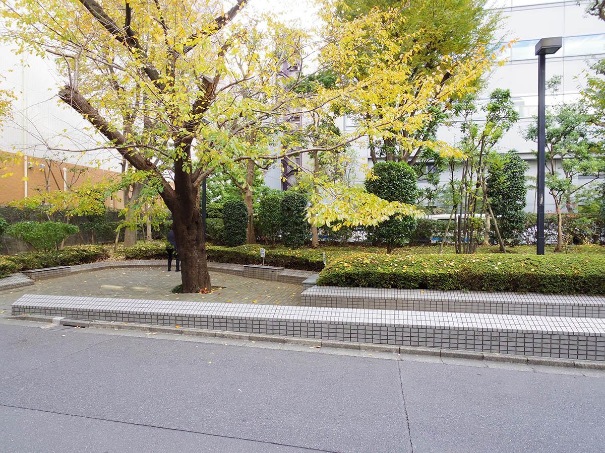 向かいの広場。紅葉がきれい