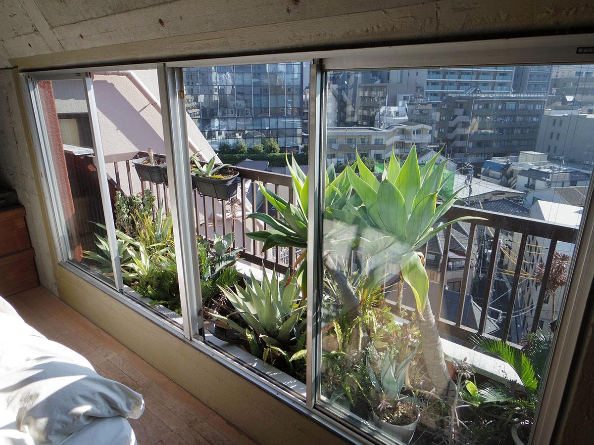 植物好きの売主は室内でもバルコニーでも植物を生育中