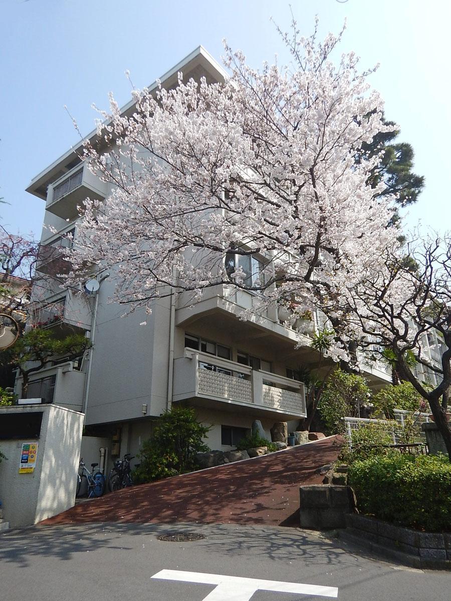 春には桜が建物を覆う