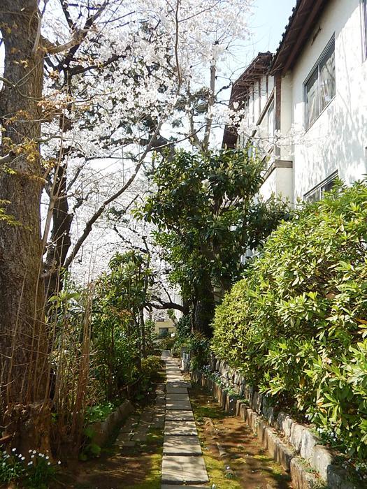 木々が茂るこの部分も同じ建物の敷地