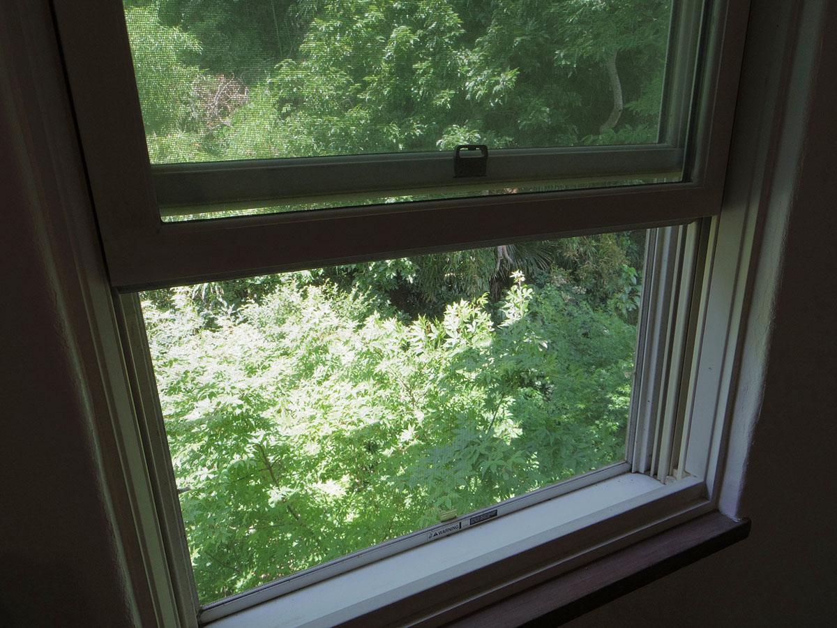 洋室から見える緑