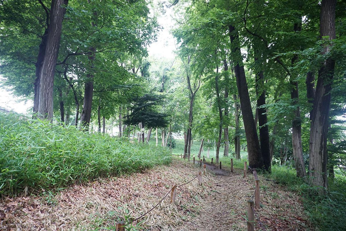 すぐ近くの大きな保全緑地:奥に歩いて行くとひろーい原っぱに出る
