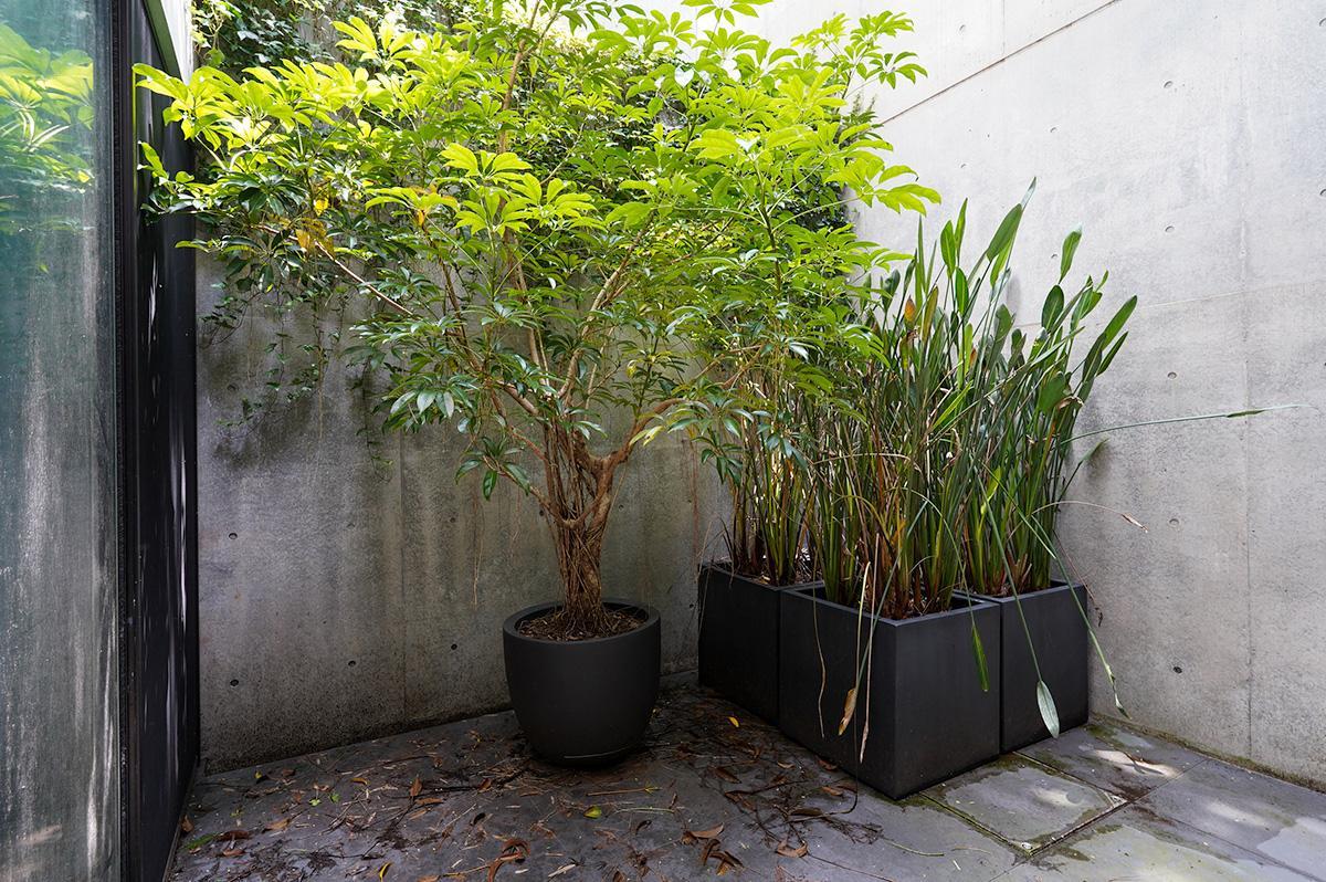 中庭にはお気に入りの植物を並べて