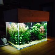 Entrance珪藻土壁子供の絵ファイヤーキング多肉植物