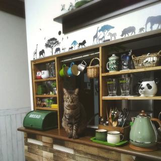 lovepandaさんのお部屋写真 #1