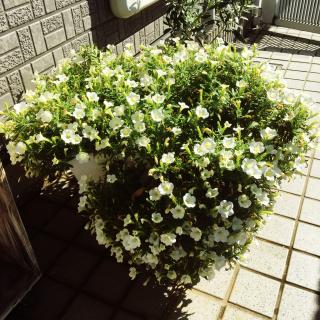 suzukoさんのお部屋写真 #1