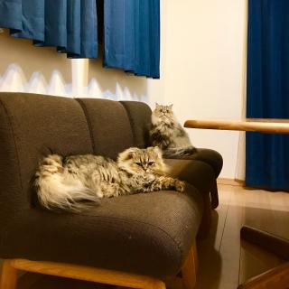 butachanさんのお部屋写真 #1